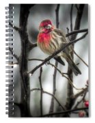 Reds Of Winter Spiral Notebook