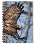 Redtail Hawk Spiral Notebook