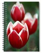 Redwhitetulips6838-1 Spiral Notebook