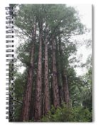 Redwood Fairy Ring Close Spiral Notebook