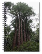 Redwood Fairy Ring Far Spiral Notebook