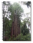 Redwood Fairy Ring Spiral Notebook