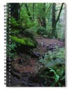 Redwood Forest Scene 1 Spiral Notebook