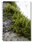 Redwood Branches Spiral Notebook