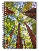Redwoods Spiral Notebook