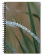 Reeds And Rain Spiral Notebook