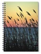 Reeds At Sunset Island Beach State Park Nj Spiral Notebook