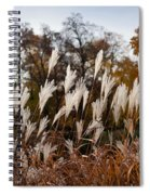 Reeds Highlighted By The Sun Spiral Notebook