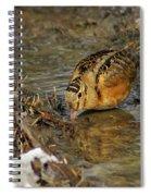 Reflected Eye Woodcock Spiral Notebook