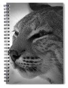 Reflecting Bobcat... Spiral Notebook