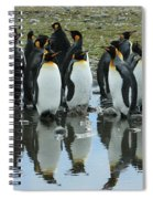 Reflecting King Penguins Spiral Notebook
