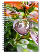 Reflections In Raindrops Spiral Notebook