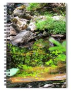 Reflections In The Stream Spiral Notebook