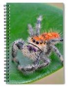 Regal Jumping Spider Spiral Notebook