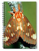 Regal Moth Spiral Notebook