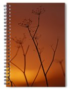 Regal Old Queen Spiral Notebook