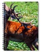 Reindeer Scratch Spiral Notebook