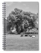 Reive Blvd Barn 15059b Spiral Notebook