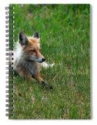 Relaxing Red Fox Spiral Notebook