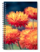 Release My Voice Spiral Notebook