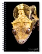 Reptile Close Up On Black Spiral Notebook