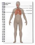 Respiratory System In Female Anatomy Spiral Notebook