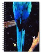 Resplendant Quetzal Of Costa Rica Spiral Notebook