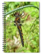 Resting Brown Dragonfly Spiral Notebook