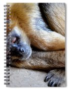 Resting Comfortably Spiral Notebook