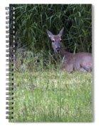 Resting Doe Spiral Notebook