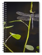 Resting Dragon Spiral Notebook