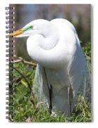 Resting Great Egret Spiral Notebook