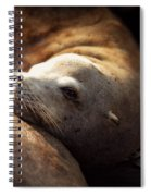 Resting On The Pier Spiral Notebook
