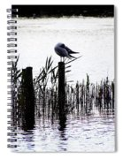 Resting Seagull  Spiral Notebook