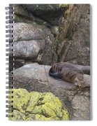 Resting Seal Spiral Notebook