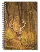 Resting White-tailed Deer Buck Spiral Notebook