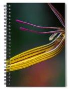 Restrepias Orchid Spiral Notebook