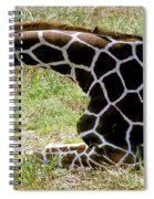 Reticulated Giraffe On Ground Spiral Notebook
