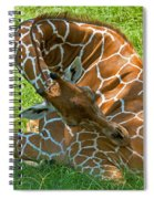 Reticulated Giraffe Sleeping Spiral Notebook