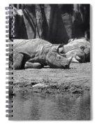 Rhino Nap Time Spiral Notebook
