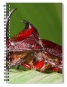 Rhinoceros Beetle Spiral Notebook