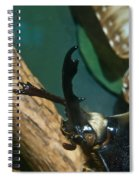 Rhinoseros Beetle Up Close And Personal Spiral Notebook