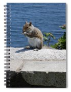 Rhode Island Squirrel Spiral Notebook