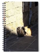 Rhodes Cat Trio Spiral Notebook