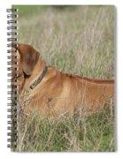 Rhodesian Ridgeback Dog Spiral Notebook