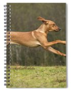 Rhodesian Ridgeback Spiral Notebook