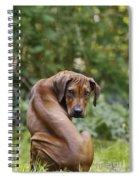 Rhodesian Ridgeback Puppy Spiral Notebook