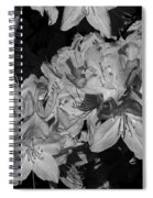 Rhododendron Heaven In Black And White Spiral Notebook