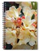 Rhododendron Nancy Evans Spiral Notebook