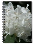 Rhododendron Purity Spiral Notebook